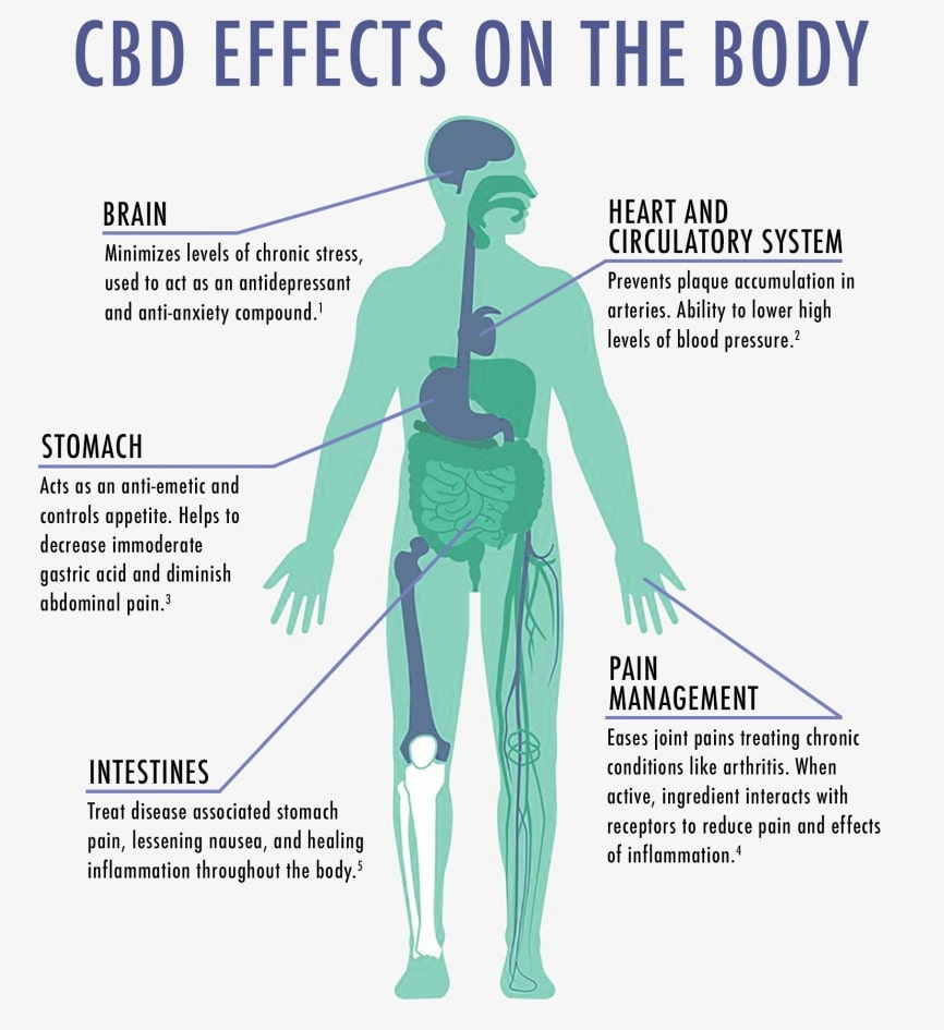 hur CBD påverkar kroppen